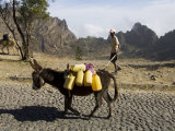 Donkey Carrying Water  Santo Antao  Cape Verde Islands  Africa