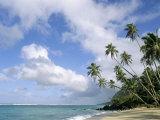 Palm Trees and Sea  Lalomanu Beach  Upolu Island  Western Samoa