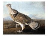 Ruffed Goose  Circa 1812