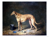 A Deerhound in a Stable Interior  1817