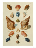 A Selection of Seashells  1758
