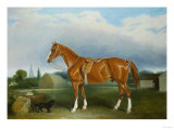 A Chestnut Hunter and a Spaniel by Farm Buildings
