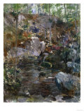 Woodland Stream
