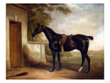 Portrait of Buckle  First Lord Chesham&#39;s Hunter  1836
