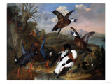 Shell Ducks and Other Fowl in a Landscape  1720