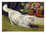 A White Persian Cat with a Ladybird