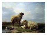 Sheep and Ducks in a Landscape