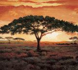 Masai Tree