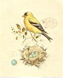 Gilded Songbird II