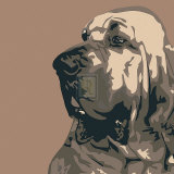 Bloodhound