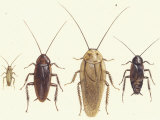 Close Views Illustrate Various Parts of a Cockroach