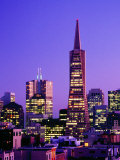 Transamerica Pyramid and City Buildings  San Francisco  California