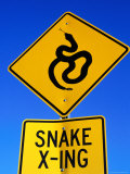Road Sign for Snake Crossing  Carefree  Arizona