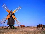 Horses Graze Near Windmill  Oland  Kalmar  Sweden