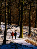 Walkers on Snow Covered Path in Woodland at Grasmere  Lake District National Park  Cumbria  England