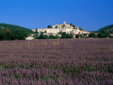 Lavender Field Below Village  Banon  Provence-Alpes-Cote d'Azur  France