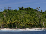 Heavily Palm-Tree Forested Mentawai Islands  Indonesia