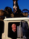 Farmer in Ute with Dogs  Mansfield  Victoria  Australia