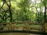 Bridge and Garden at Yoyogi-Koen  Tokyo  Kanto  Japan