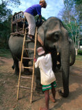 Elephant Ride  Bolaven Plateau  Champasak  Laos