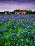 Field of Blubonnets  Marble Hill Area  Texas