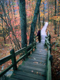 Woman Standing on Boardwalk in Johnson's Shut-Ins State Park During Autumn  Missouri