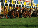 Start of Horse Race  Sydney  New South Wales  Australia