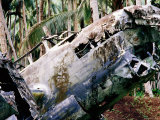 Wreck of Betty Japanese Bomber in Jungle  Rabaul  East New Britain  Papua New Guinea