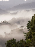 Mist Rising from Forest Floor  Nyungwe Forest National Park  Gisenyi  Rwanda
