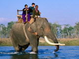 Elephant Carrying Tourists Across Ramgana River  Royal Chitwan National Park  Narayani  Nepal