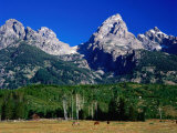 Grand Teton  Near Cottonwood Creek  Grand Teton National Park  Wyoming