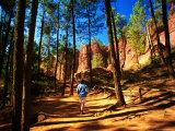 Walker Among Pines on Sentier des Ocres  Roussillon  Provence-Alpes-Cote d'Azur  France