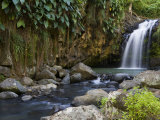 Annandale Falls  Constantine  St George  Grenada