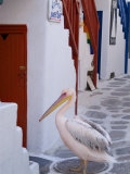Pelican Standing in Alleyway  Mykonos Island  Southern Aegean  Greece
