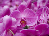 Orchid at Flower Market  Kowloon  Hong Kong  China