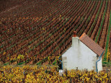 Autumn Vineyards and Farmhouse  Cote de Beaune  Beaune  Burgundy  France
