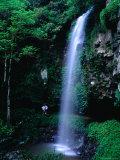 Crystal Shower Falls on the Wonga Walk Trail in Dorrigo National Park  New South Wales  Australia