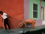 Villager Pulling Pig on Rope  Tlacotalpan  Veracruz-Llave  Mexico