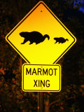 Marmot Crossing Sign Near Maroon Bells  Aspen  Colorado