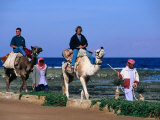 Bedouins Lead Tourists on Camels  Dahab  Egypt