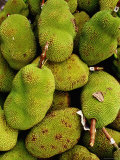 The Jack Fruit  Malaysia