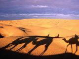 Camel Ride Shadows Across Sahara  Ksar Ghilane  Kebili  Tunisia