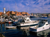 Boats Moored in Marina  Cabo San Lucas  Baja California Sur  Mexico