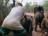 Men Driving Elephants for Ride  Bolaven Plateau  Champasak  Laos