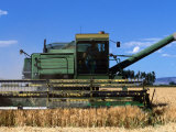 Wheat Harvester  Newell  Tule Lake  California