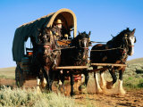 Mormon Man Driving Horse Carriage  Mormon Pioneer Wagon Train to Utah  Near South Pass  Wyoming
