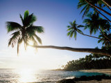 Sun Shining Off Water and through Palm Tree at Return to Paradise Beach  Upolu  Samoa