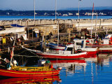 Fishing Boats in Harbour  Punta del Este  Maldonado  Uruguay
