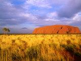 Uluru  Uluru-Kata Tjuta National Park  Northern Territory  Australia