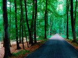Road through Forest of Fontainbleau  Fontainebleau  Ile-De-France  France